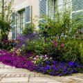 Plantes pour votre jardin